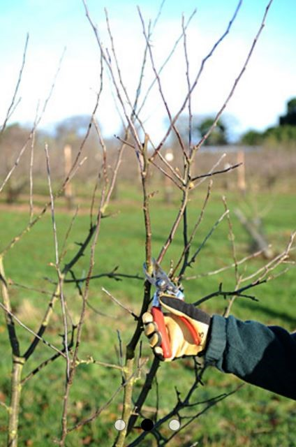 Pruning article P Bursac 7.6.16